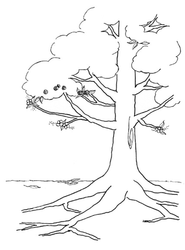 Tree of Life Template